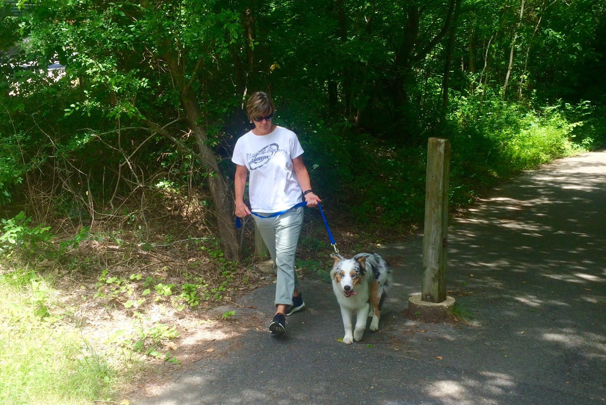 summer trail with dog