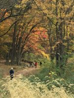 Brandywine Greenway Valley Trail Picture